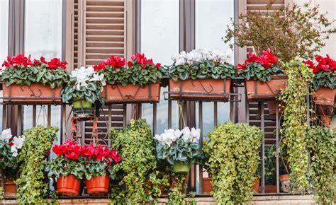 immagini di balconi fioriti balconi fioriti anche in autunno carollo fiori zugliano vi