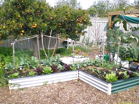 growing vegetables in backyard growing vegetables in small spaces sustainable