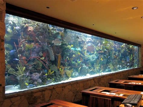 aquarium design ireland big tropical fish for aquarium aquarium design ideas