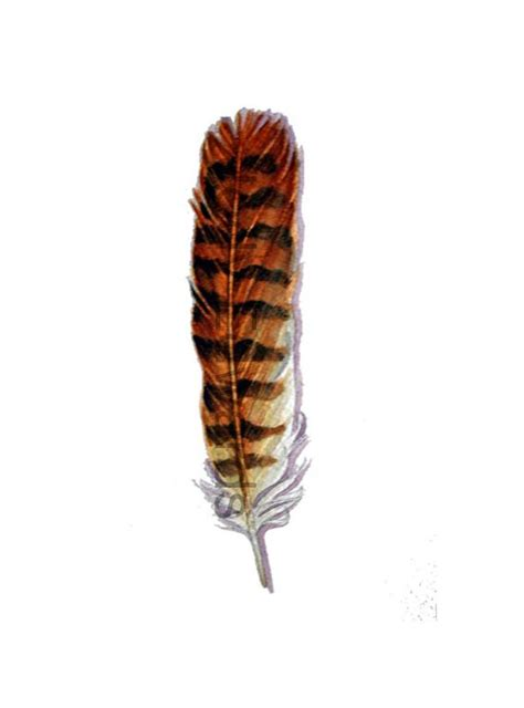 kestrel tattoo designs bird of prey american kestrel feather original