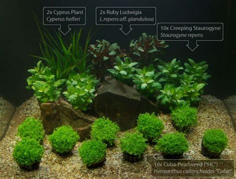Pinset Aquascape aquarium plant set aquascape sort 4 aquariums plants and fish