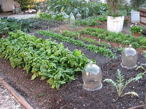 Winter Vegetable Gardens Fall Vegetable Gardening A For Growing Things