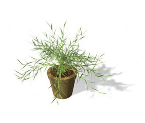 miniature indoor plants xfrog public plants