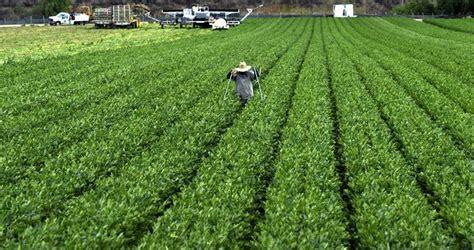 imagenes de trabajadores temporales trabajadores temporales agr 237 colas con visa reemplazan a