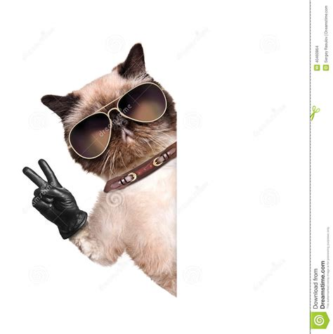 Cat Time Black Leather cat with peace fingers in black leather gloves stock photo