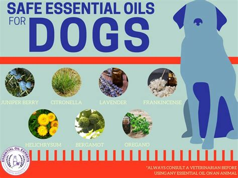 lavender on dogs 25 best ticks on dogs ideas on