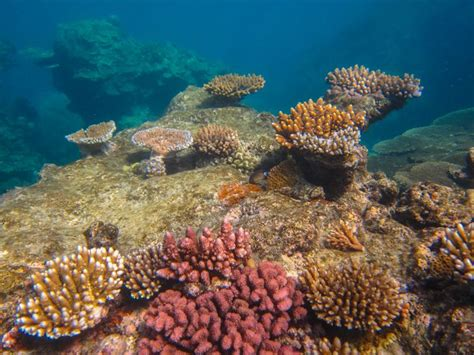 best place to dive the great barrier reef best 25 great barrier reef diving ideas on