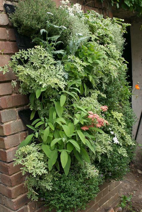 celebrating vertical gardening  garden  north