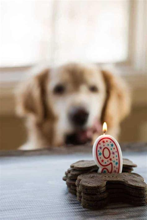 how does puppy breath last mint buckwheat biscuits happy 9th birthday einstein brown eyed baker