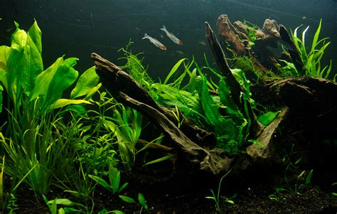 Fluval Aquascape by The Osaka Forest Page 5 The Planted Tank Forum