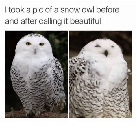 White Owl Meme - funny memes of 2017 on sizzle copped