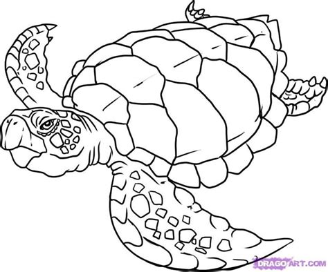 free printable animal drawings 42 best images about animal projects on pinterest