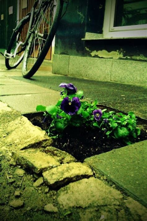 Guerilla Gardening by 33 Best Images About Guerrilla Gardening On