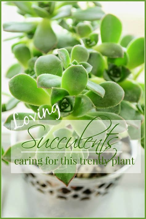 succulents care of a trendy plant gardening pinterest