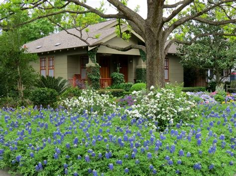 Houston Lawn And Garden by Zero Lawn Xeriscape Traditional Landscape Houston By David Morello Garden Enterprises Inc