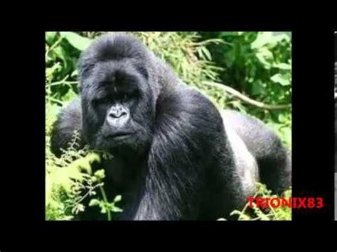 imagenes animales africanos animales de africa imagenes recopilacion increibles
