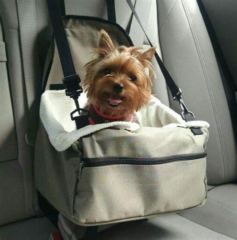 yorkie in car seat 12 realities new yorkie owners must accept sivar es humor