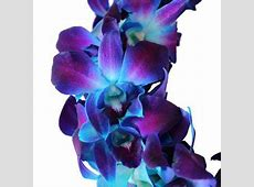 The categories of orchids include wholesale dendrobium ... 1 800 Flowers.com