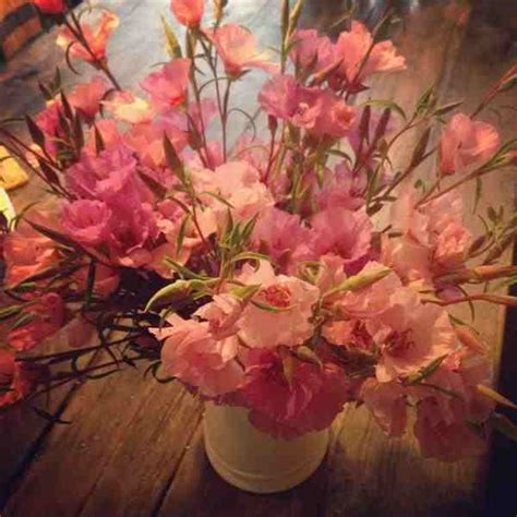 Sprei Kendra Flower seven reasons to grow annual flowers for your cutting