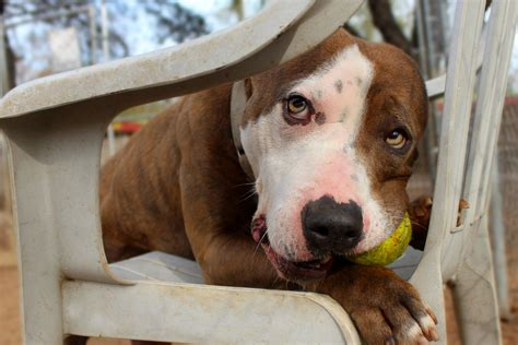 pets alive dogs pets alive play groups pets alive
