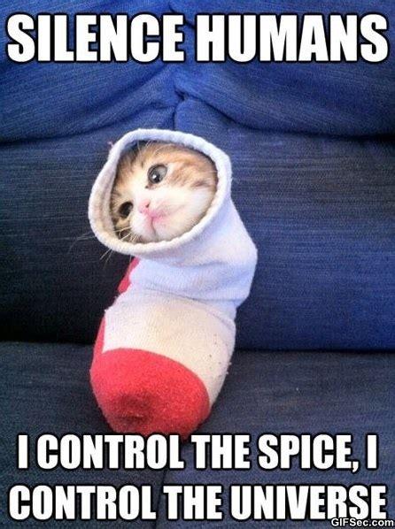 Sock Meme - cute thank you meme memes