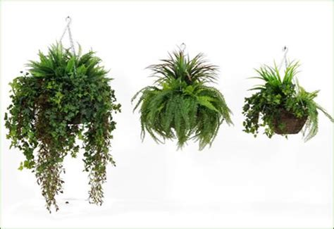 foliage plants for hanging baskets artificial plants from greenscene