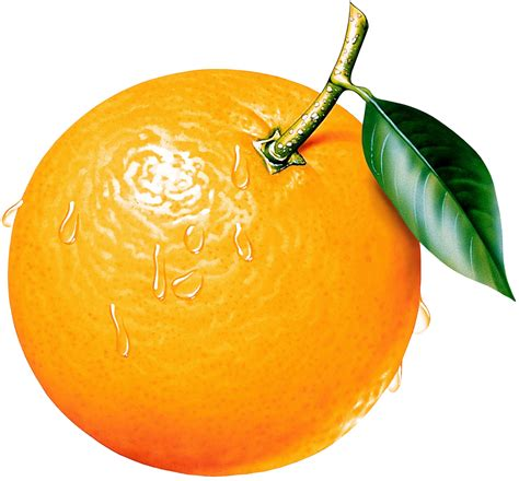orange clipart best orange clip 16691 clipartion