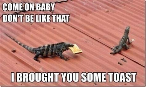Lizard Toast Meme - this suave lizard has the solution to all your