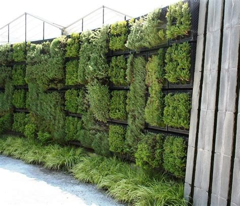 herbs on wall herb wall diy home garden pinterest