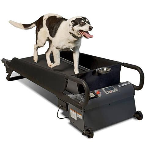 treadmill for dogs petzen dogtread treadmill gadgetify