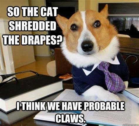 Lawyer Dog Memes - lawyer dog these are a few of my favorite things