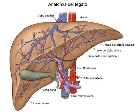 alimentazione fegato ingrossato il fegato