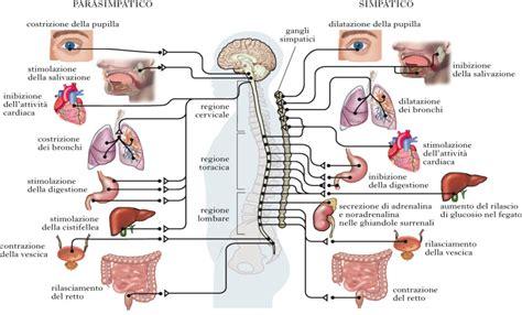 vasi chiliferi metabolismo