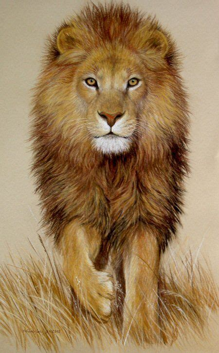 imagenes de leones vintage las 25 mejores ideas sobre lion en pinterest leones