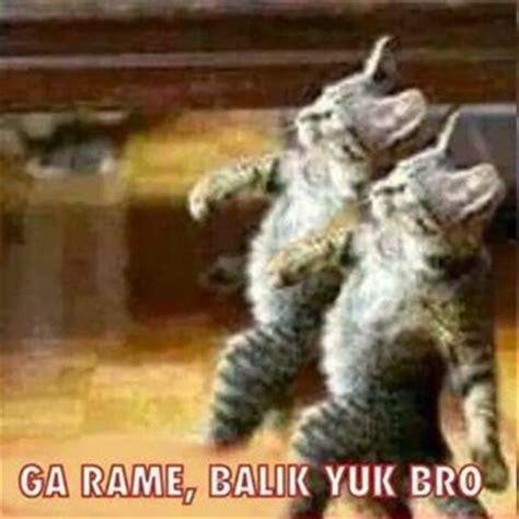 kumpulan gambar lucu kucing numpang lewat