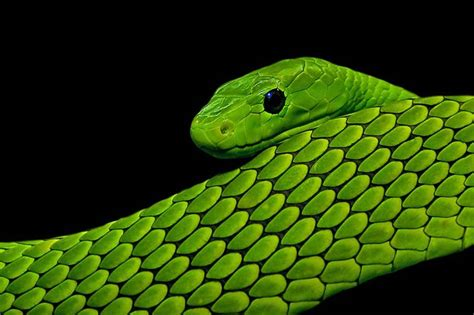 colorful snake photography 50 colorful snakes in their habitat