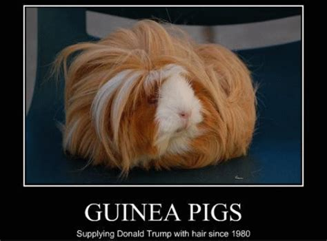 Funny Hair Meme - fridayfrivolity funny animal hairstyles hilarious