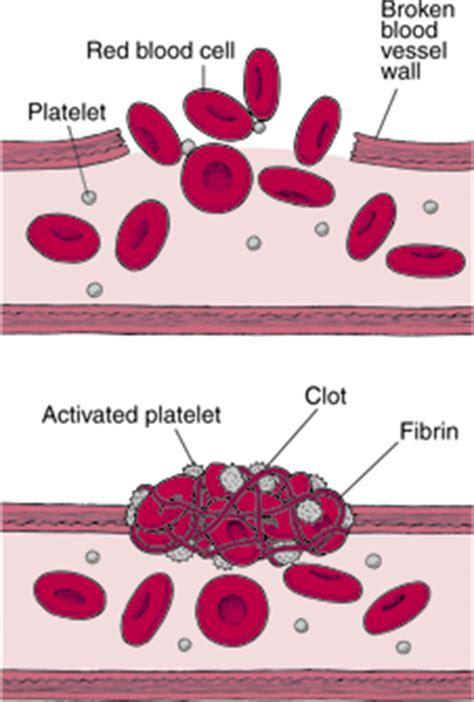 blood clotting mechanism diagram mozac biology department what is blood clotting