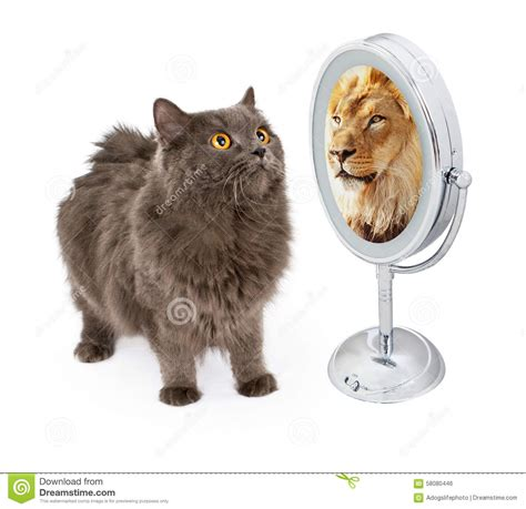 Cat With Lion Reflection In Mirror Stock Photo   Image