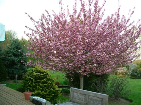 decorative trees for the home beautiful ornamental surroundings home interior design
