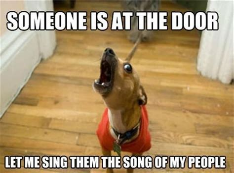 The Dog Meme - 10 memes that get life with dogs oh so right