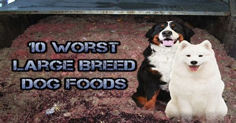 worst food brands which breeds of dogs are the least healthy breeds picture