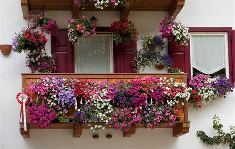 balcone fiorito il segreto per avere un bellissimo balcone fiorito bigodino