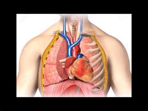 posizione organi interni apparati corpo umano