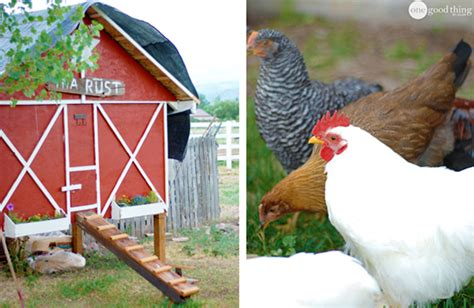 backyard chicken raising raising backyard chickens one thing by jillee