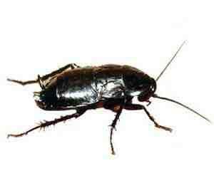 scarafaggi neri in casa sognare scarafaggi significato dello scarafaggio nei sogni