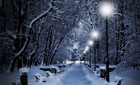 photography nature winter trees snow bench night