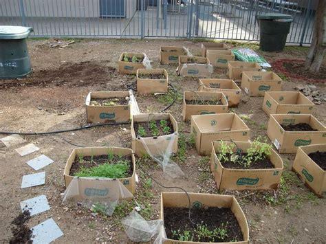 Gardening Forum by Southwest Gardening Forum My Cardboard Box Garden