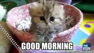 Good Meme Cat - good morning kitten memes