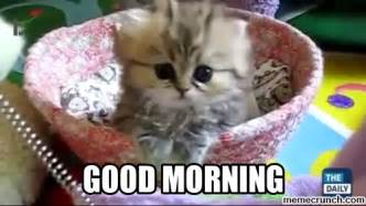 Good Morning Cat Meme - good morning cat